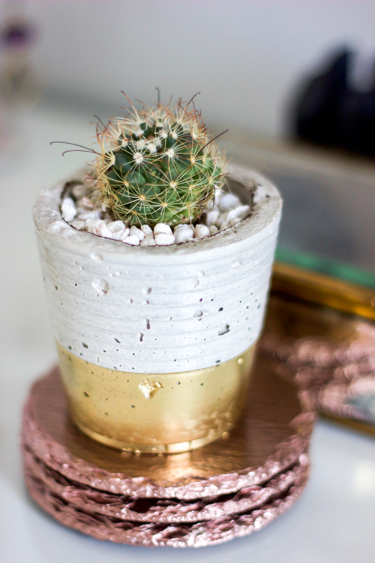 Beautiful potted cactus from My Pal Al