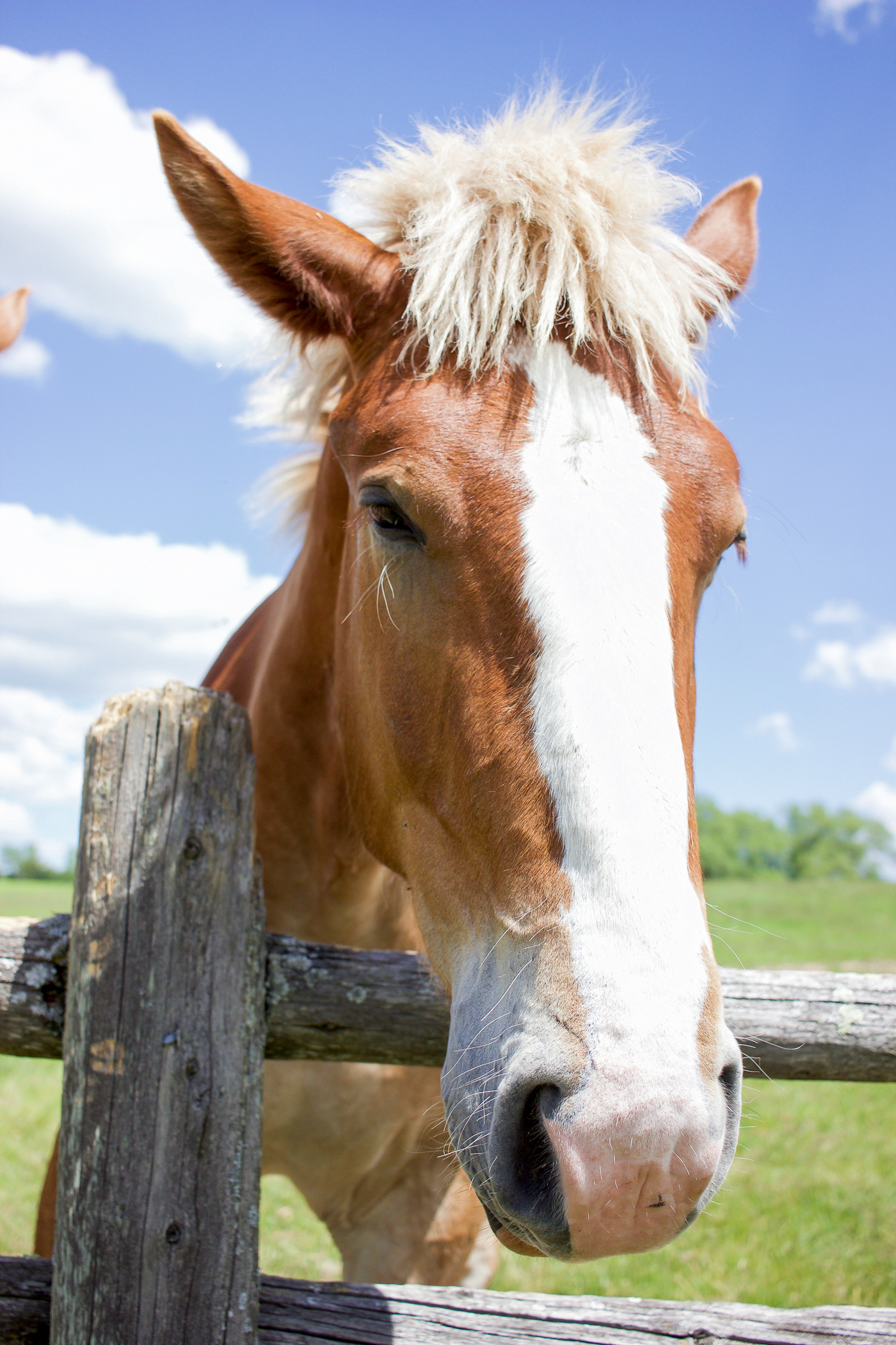 beautiful horses at the iron horse ranch by south pond farms