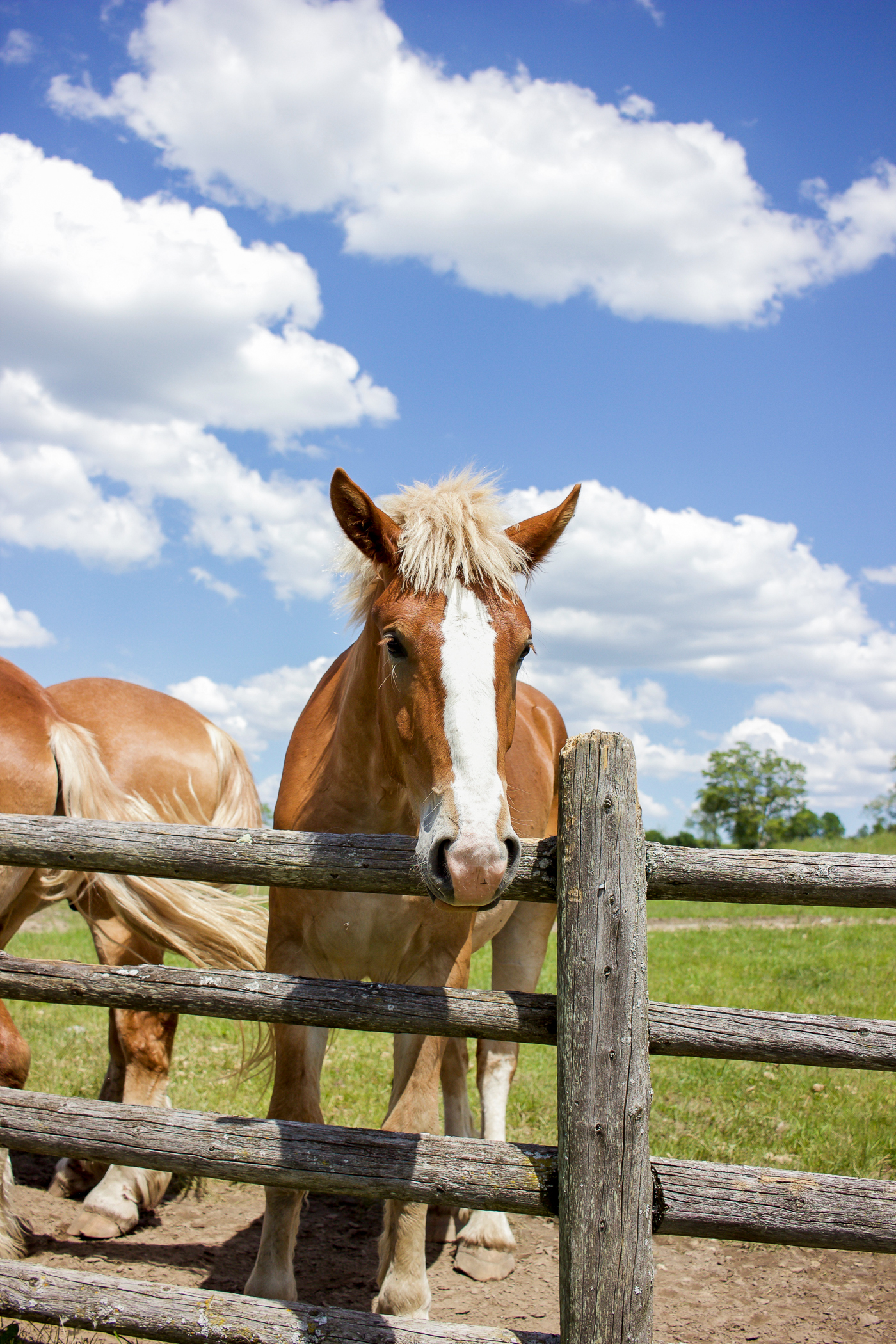 the horses at the iron horse ranch, another property of south pond farms